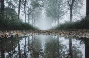 reflectie-plas-water
